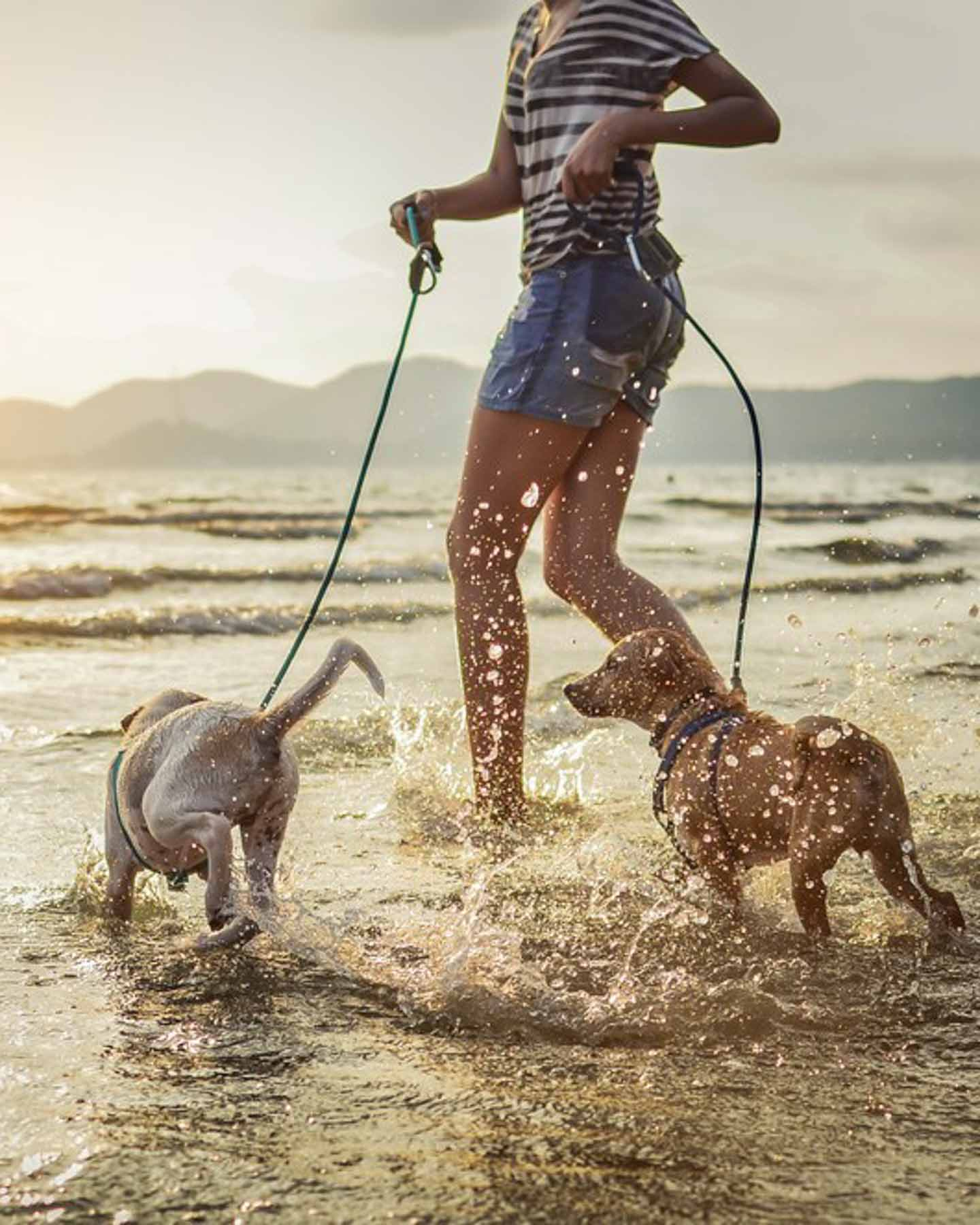 pets in water